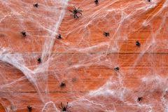 Decorative Spiders Halloween Background With Decorative Creepy Web And Spiders On O