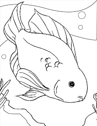 free fish coloring pages u2013 1023 1325 high definition coloring