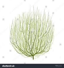 tumbleweed green tumbleweed stock vector 315958394 shutterstock