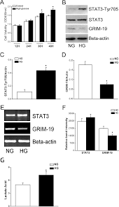 high glucose induces down regulated grim 19 expression to activate