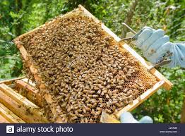 maintenance of apiculture stock photos u0026 maintenance of apiculture