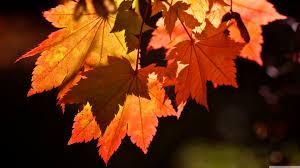 cute autumn backgrounds autumn leaves hd desktop wallpaper high definition fullscreen