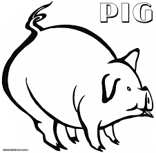 coloring coloring pages pig