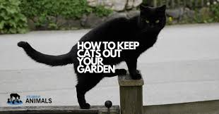 How To Keep Cats Out Of Your Backyard How To Keep Unwanted Cats Out Of Your Garden With Cat Fence Spikes