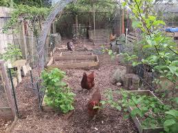 Backyard Chicken Run by Chicken Run Out Of Eden