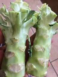 cuisiner du brocoli découvrez comment préparer et cuisiner les pieds de brocoli et chou