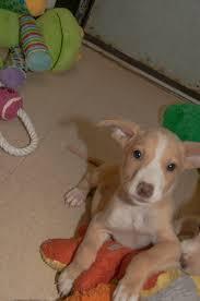 hex dog training blog dog this