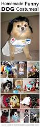 Pug Halloween Costumes Sale 15 Clever Dog Costumes Beggin U0027 Attention Howloween