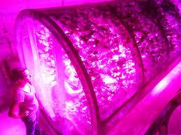 philips led grow light finds led lights provide improved energy efficiency and production