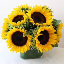 Flower Delivery Boston Sunflower Delivery Boston Ma Same Day Delivery Nationwide