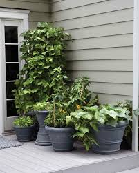 Plants For Patio by Small Space Garden Ideas Martha Stewart