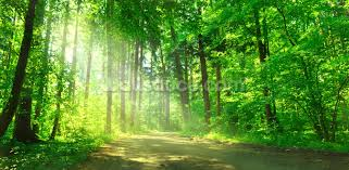 tree wallpaper forest wallpaper murals wallsauce usa forest path in sunshine wallpaper mural