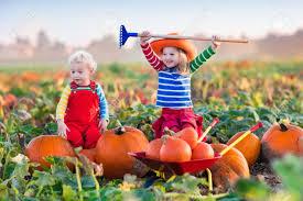 little and boy picking pumpkins on halloween pumpkin patch