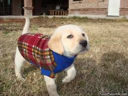 puppy sweater funnypuppysite