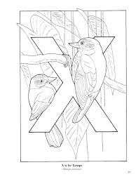 bird coloring pages for kids free printable bird coloring sheets