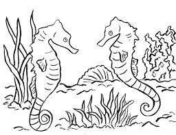seahorse coloring page samantha bell