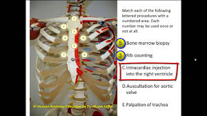 Borders Of The Heart Anatomy Questions On The Surface Anatomy Of The Thorax Youtube