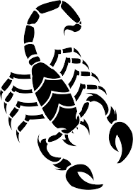 scorpions png images scorpion png