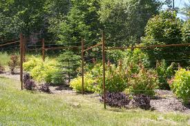 shrubs and deer fences what works and what doesn u0027t site u0026 insight
