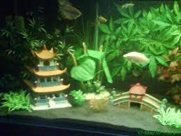 image gallery japanese fish tank