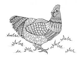 coloring page of a chicken 43 printable adult coloring pages pdf downloads favecrafts com