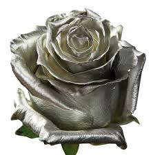 silver roses silver roses blooms farm direct magnaflor