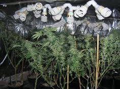 cfl grow light fixture pin by high hawk on gardening harmony 101 pinterest grow lights
