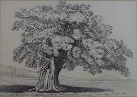 Oak Tree Drawing Jane Worship 19th Century British A Spreading Oak Tree Pencil