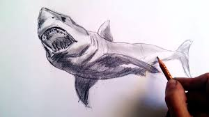 how to draw realistic sharks with pencil step by step and easy