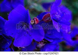 blue and purple flowers purple princess stock photo images 1 339 purple princess royalty
