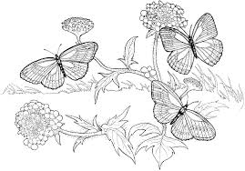 fall coloring pages for adults bestappsforkids com