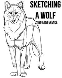 sketching a wolf by using a reference by kfcemployee on deviantart