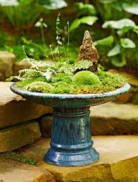 best 25 dish garden ideas on pinterest suculent plants outdoor