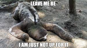 Anteater Meme Generator - when you just wanna do nothing for the whole week imgflip