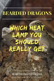 bearded dragon lighting guide which bearded dragon heat l you should really get bearded