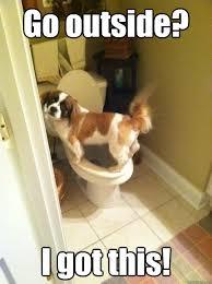 Potty Training Memes - go outside i got this the potty trained dog quickmeme