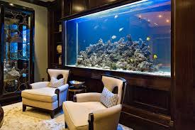 home aquarium residence aquarium adding life to your home learn about birds