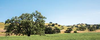 room to breathe in the santa ynez valley u2022 kingdom magazine