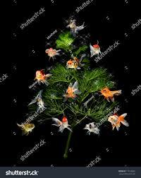 tree underwater concept goldfish ornament stock photo