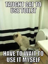 Meme Toilet - bathroom meme 14 teaching a cat to use the toilet means waiting