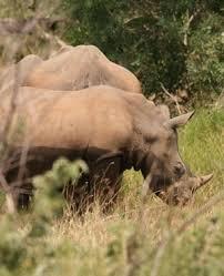 sle resume journalist position in kzn wildlife ezemvelo accommodation kzn police arrest three suspected rhino poachers