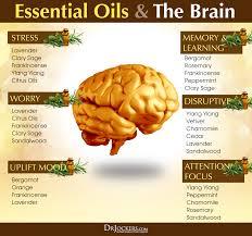 how to use essential oils for brain health drjockers com