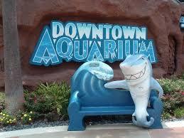 downtown aquarium celebrates thanksgiving with family friendly