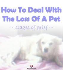 grieving loss of pet how to deal with the loss of a pet and understand the stages of grief