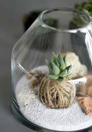 how to make and care for a succulent terrarium martha stewart