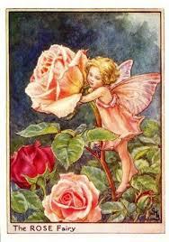 rose flower fairy u2013 flower fairy prints