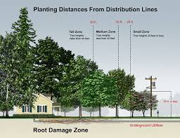how to plan for new trees citified gardens