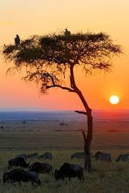 best 25 african sunset ideas on pinterest safari animals sunrise in the african savannah
