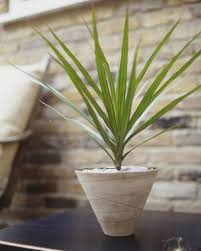 low light indoor houseplants ideas for bring fresh air to your