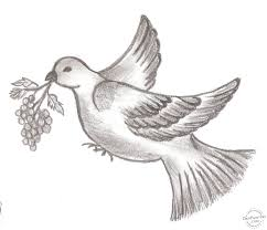 beautiful bird pencil drawing draw birds sketch with pencil full